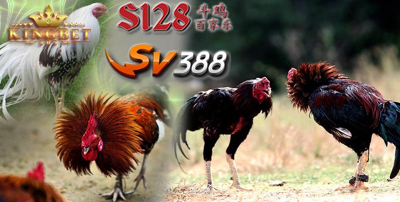 Sabung Ayam Online Terbaru Situs S128 Asia | S128laga.biz